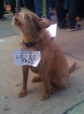 dog-loves-fags